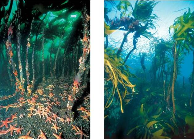 Studiengang Meeresbiologie